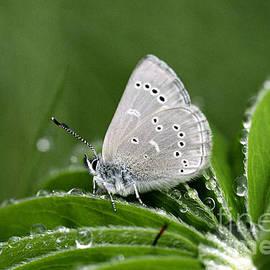 Alana Ranney - Silver Butterfly