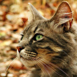 Michelle Wrighton - Silver Grey Tabby Cat