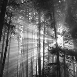 Diane Schuster - Silver Light