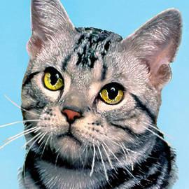 Bob and Nadine Johnston - Silver Tabby Kitten