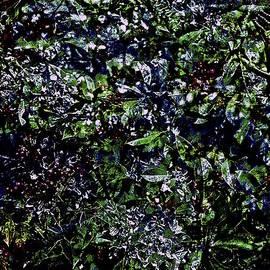 Kasha Baxter - SILVERblueRED birdberries.jpg
