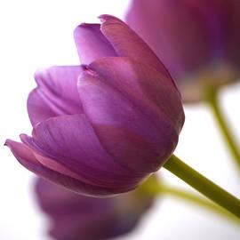 Deb Halloran - Simply Purple