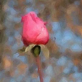 Lorna Hooper - Single Pink Rose