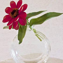 Sandra Foster - Single Pink Zinnia Blossom