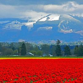 Brad Walters - Skagit Tulip Fields