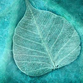 Bonnie Bruno - Skeletal Leaf