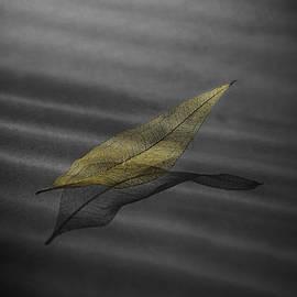 Wes Jimerson - Skeleton leaf 4524