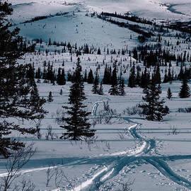 Lara Poirrier - Ski Trails through the Snow