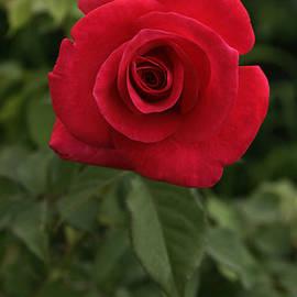 Sunil Kapadia - SKC 0434 The Coiled Blossom