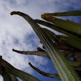 Mark J Dunn - Sky Cactus