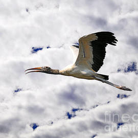 Al Powell Photography USA - Sky Stork