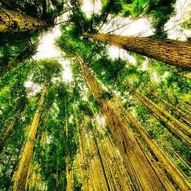 Lilia D - Skyscraper trees