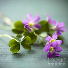 Jan Bickerton - Sleeping Beauty Wild Flower