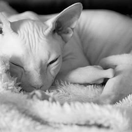 Zina Zinchik - Sleeping beauty