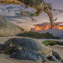 Hawaii  Fine Art Photography - Sleeping Honu