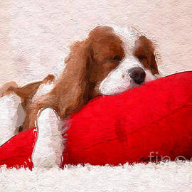 Anthony Fishburne - Sleeping Puppy on Red Pillow