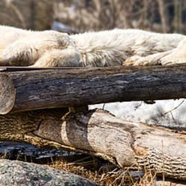 Les Palenik - Sleeping wolves on logs - like logs
