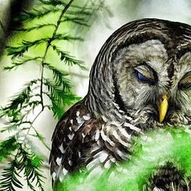 Pamela Blizzard - Sleepy Owl