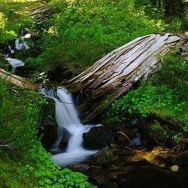 Jeff  Swan - Small Water N The Green