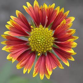Bliss Of Art - Smile of Flower