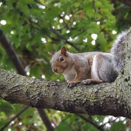 Lingfai Leung - Smiling Squirrel ready for pose