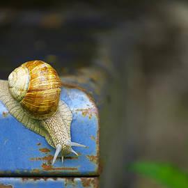 Ivan Slosar - Snail