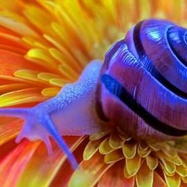 Leslie Crotty - Snail Pondering On A Flower
