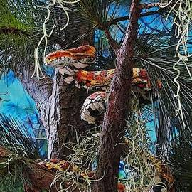 Lenore Senior and Ed Burger - Snake in the Tree