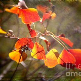 Judi Bagwell - Image of Fall