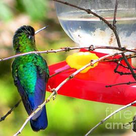 Al Bourassa - Sneaking Up On An Irazu Hummingbird