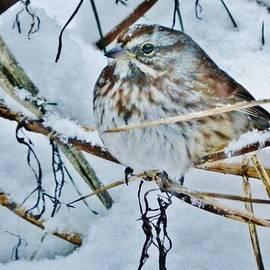VLee Watson - Snow Art