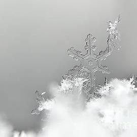 Jussi Pietarinen - Snow bird