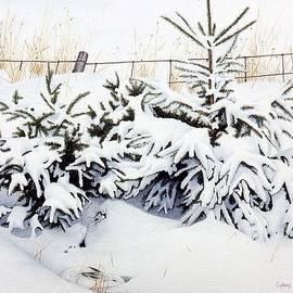 Conrad Mieschke - Snow-bound Snowshoe Hare