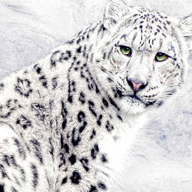 Joachim G Pinkawa - Snow Cat