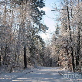 Nancy Anderson - Snow Covered Road