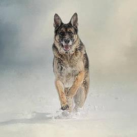 Jai Johnson - Snow Day For The Shepherd