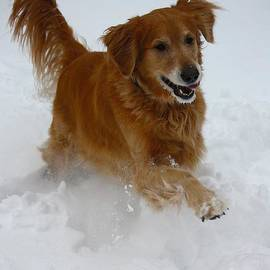 Veronica Batterson - Snow Day