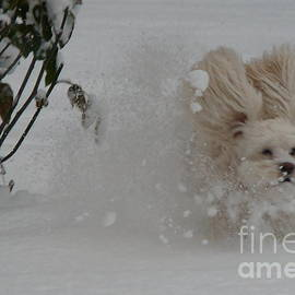 Heike Ward - Snow Dog