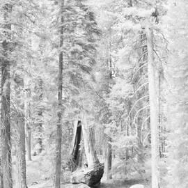Angela Stanton - Snow impressions