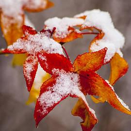 Karol  Livote - Snow in Autumn