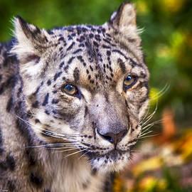 David Millenheft - Snow Leopard 1