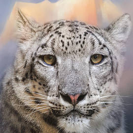 Jai Johnson - Snow Leopard At The Mountain
