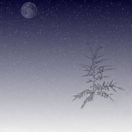 Barbara S Nickerson - Snow Moon