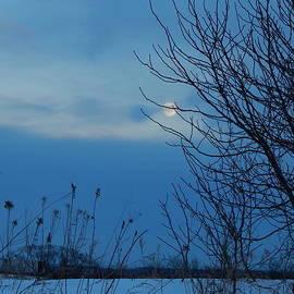 Wild Thing - Snow Moon