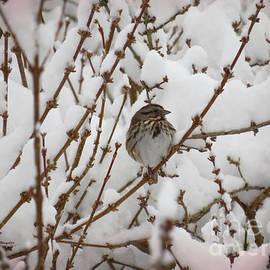 Shelly Weingart - Snow Sparrow
