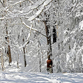 Denise Romano - Snow Walking