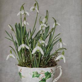 ShabbyChic  fine art photography   - Snowdrop Tea...