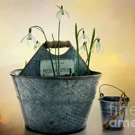 Ann Garrett - Snowdrops in a Bucket