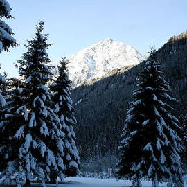 Christiane Schulze Art And Photography - Snowed Under Firs