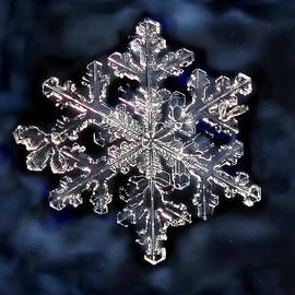 Lorella  Schoales - Snowflake Blue